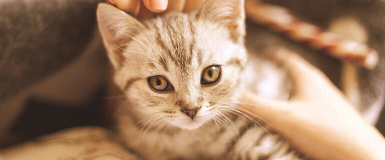 adopter et accueillir un chaton