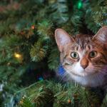 Les chats et Noël